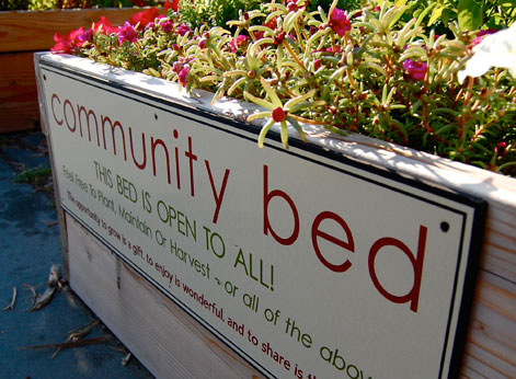 Community Garden Bed