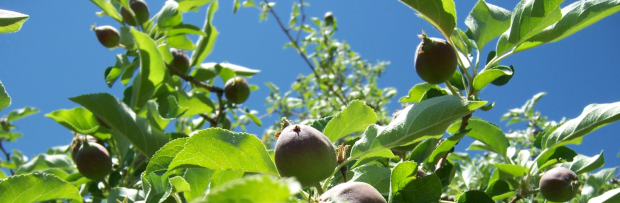 Layton Orchard 012