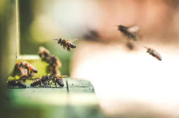 Bees Catalyst