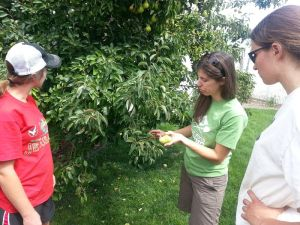 bridget teaching crew about harvesting pears