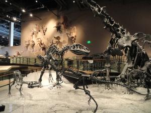 Fossil_displays_-_Natural_History_Museum_of_Utah_-_DSC07215