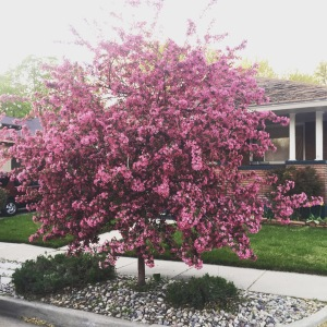 Photo of tree in bloom.