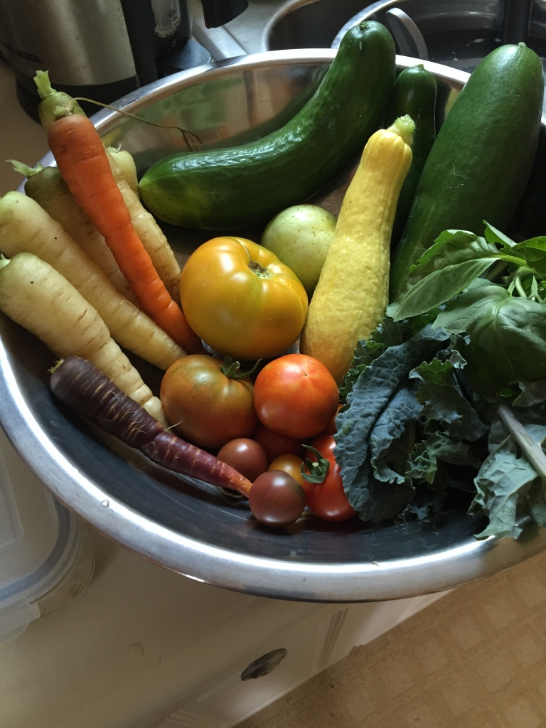 Photograph of a bowl of fresh homegrown veggies including carrots, squash, zucchini, cucumber, tomatoes, and greens.