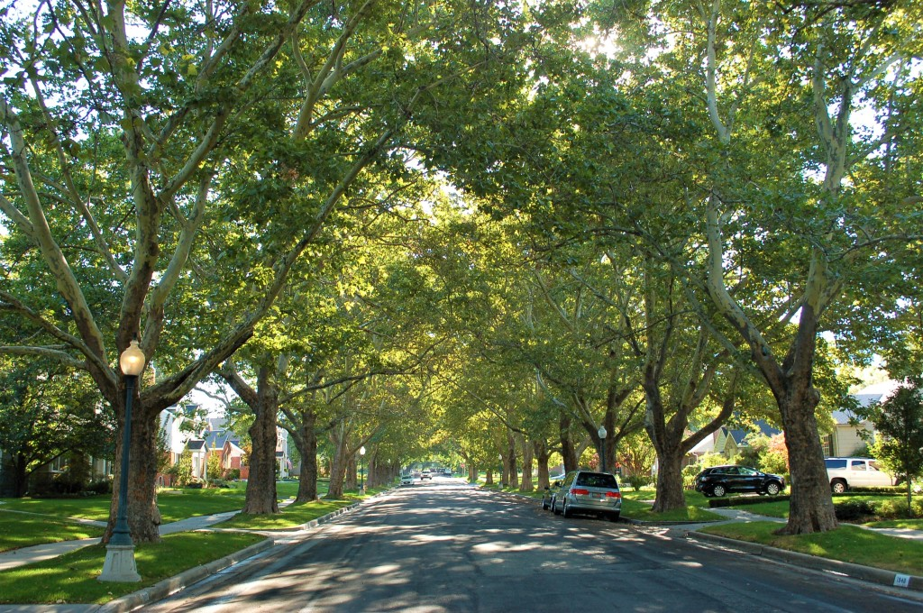 Photo of SLC street lined with trees.
