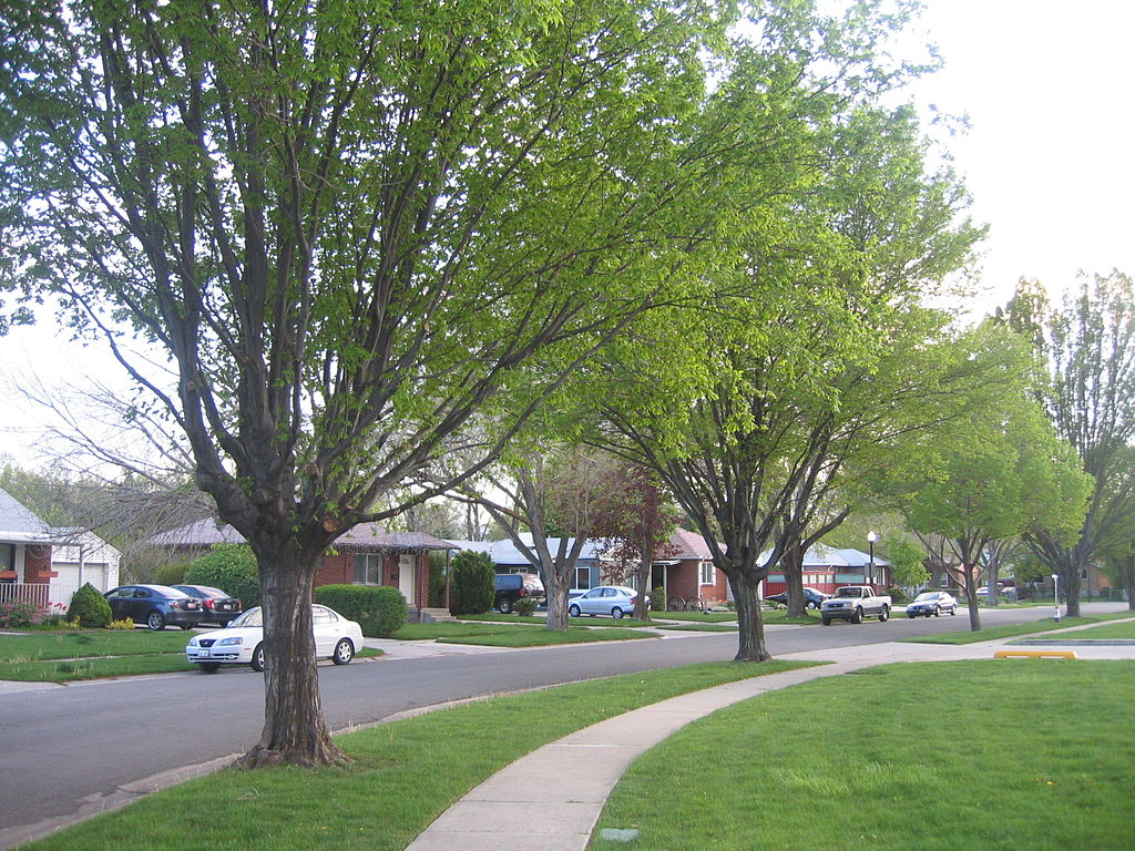 Trees lining street in Rose Park.