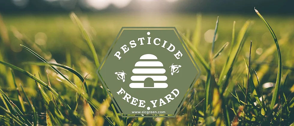 Image of grassy lawn with sage green hexagonal Pesticide Free Yard sign.