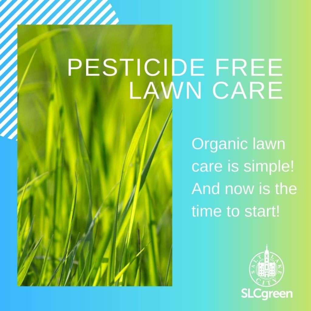 """Graphic includes a photo of bright green grass on a teal, green, and chartreuse, backdrop. Text in white reads """"Pesticide Free Lawn Care Organic lawn care is simple! And now is the time to start!"""" with the SLCgreen logo."""
