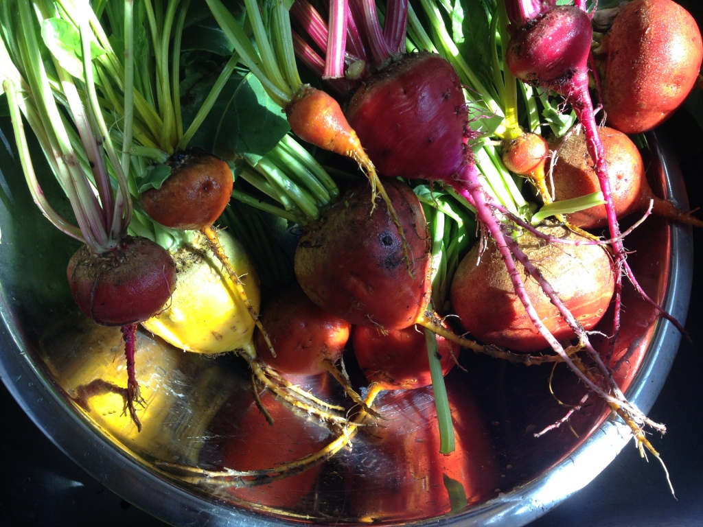 Photo of brightly colored beets in a bowl.