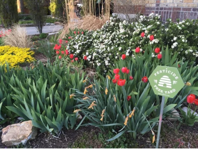 Photo of green pesticide free sign in front of a garden of blooming red, white, and yellow flowers.
