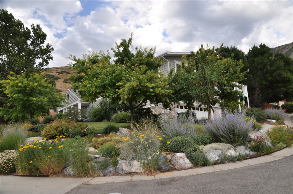 Photo of house with many shade trees and water-wise plants.