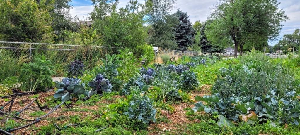 Photo of Darin Mann's Village Co-Op Garden.
